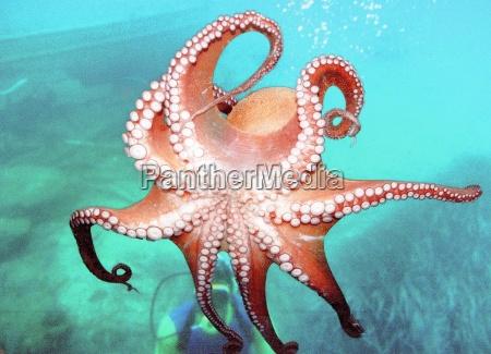 octopus - 54874
