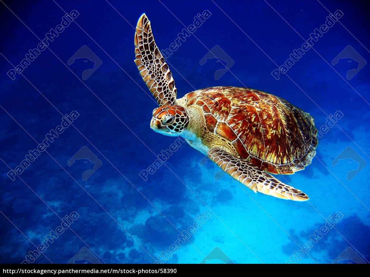 schildkröte2 - 58390