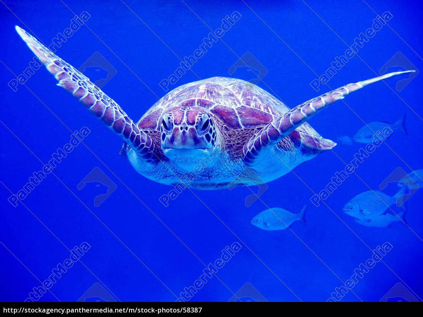 turtle - 58387