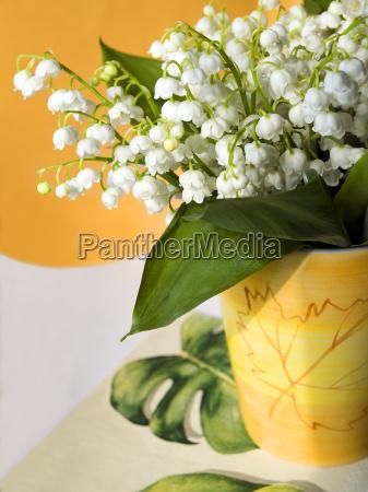 mayflower - 66589