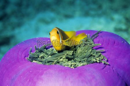 my anemones mine