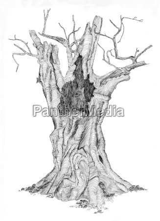 tree branch drawing photo picture image