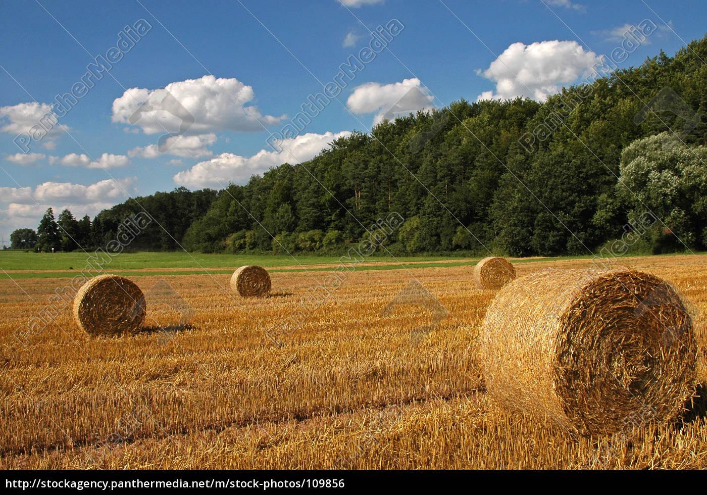 harvest, time, ii - 109856