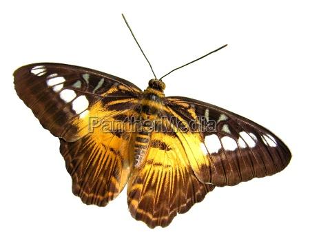 butterfly - 126886