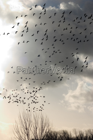 birdwatching, 03 - 143062