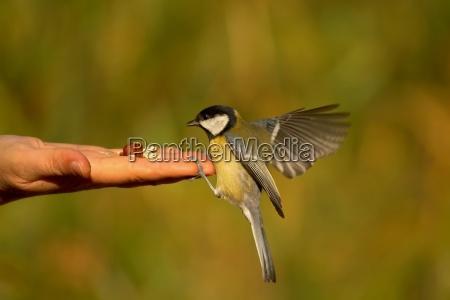 if a bird