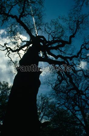 old, tree - 148671