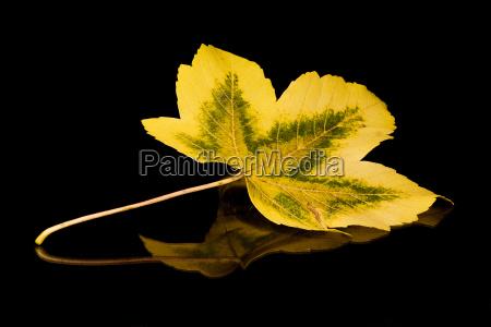 autumn, holidays, i - 149590