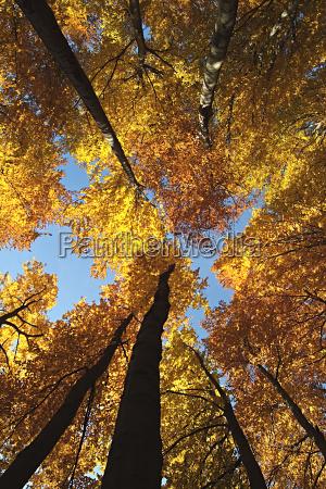 autumn, sky - 157519