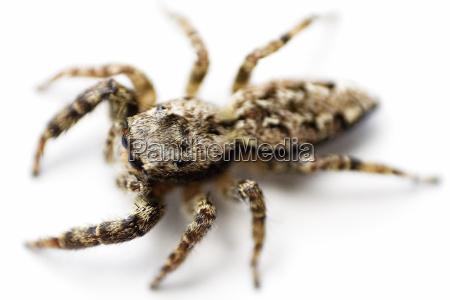spider, i-b - 157747