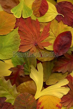 autumn, leaves, 6 - 167126