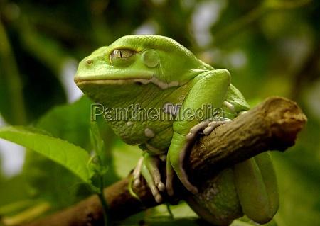 arvore animal verde animais ver ramo