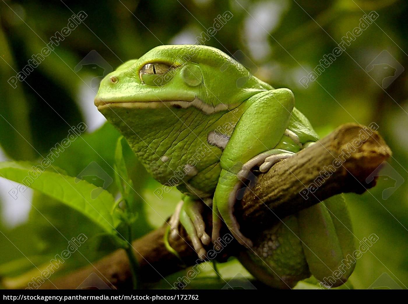 frog - 172762