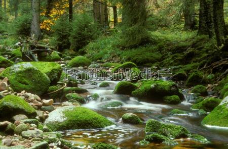 black, forest - 174724