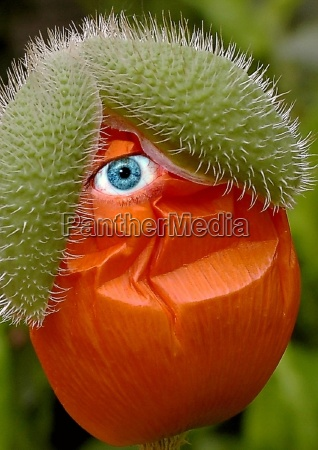 flower, plant, green, bloom, blossom, flourish - 174119