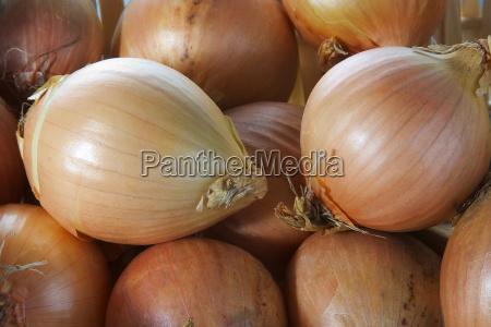 onions, 05 - 181668