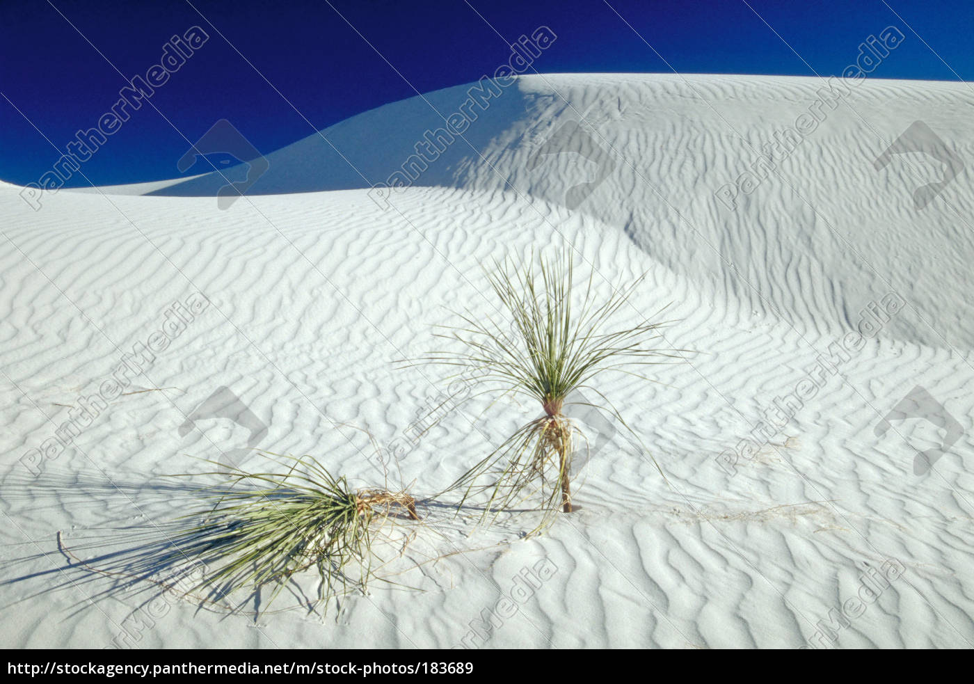 white, sands, -, no.1 - 183689