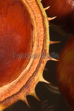 chestnuts 10