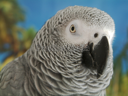 toni my grey