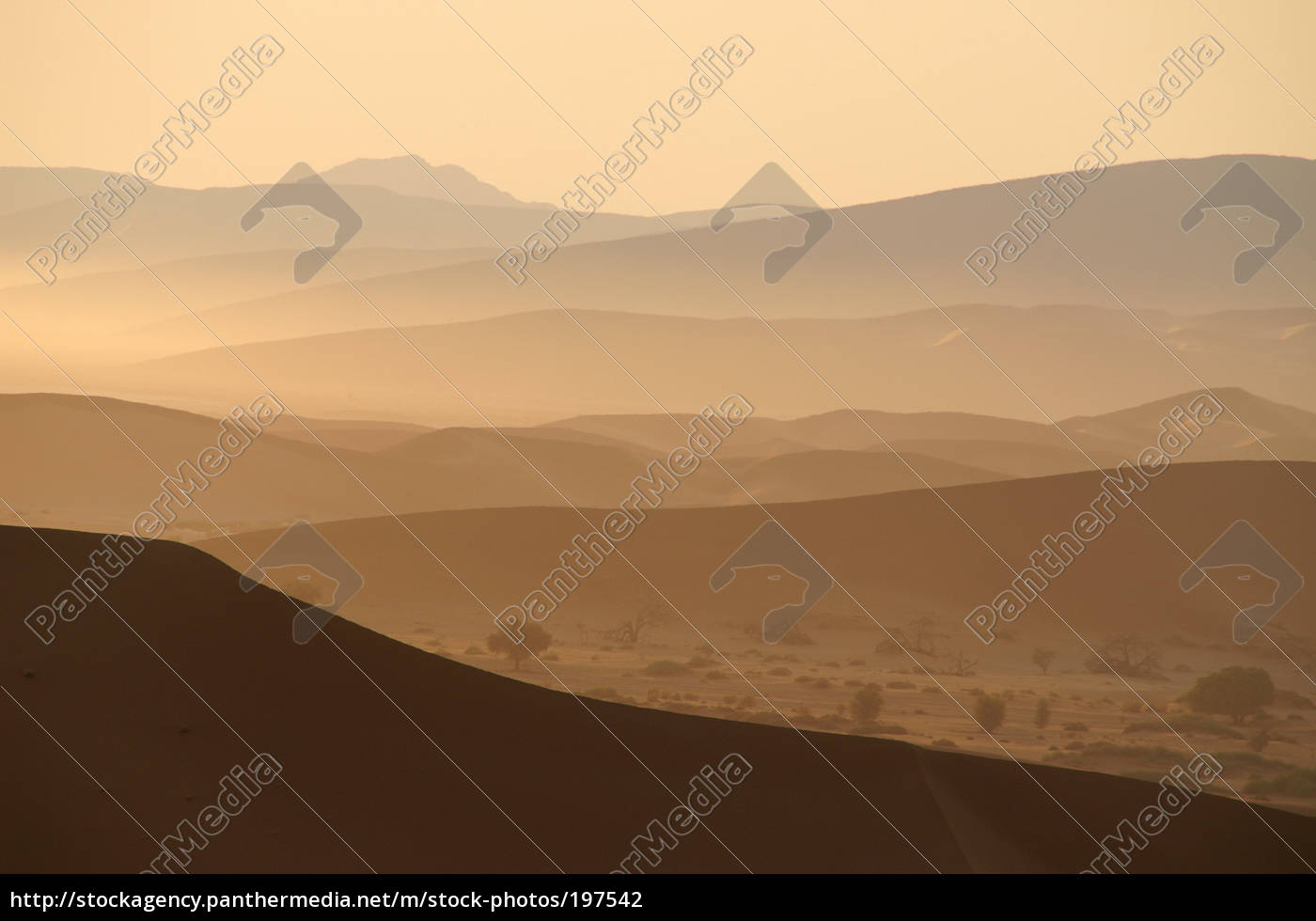 desert, morning - 197542
