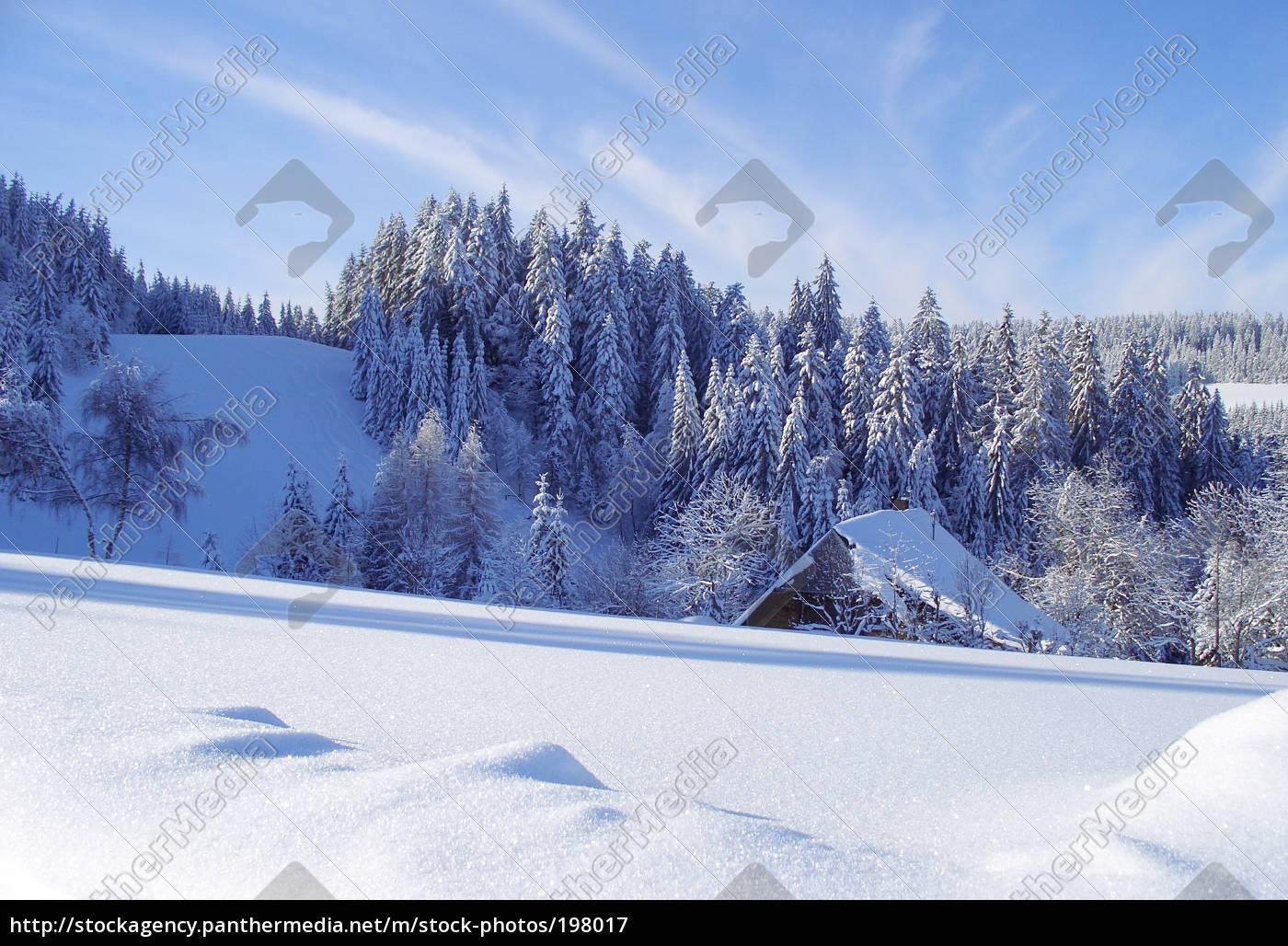 black, forest, winter - 198017