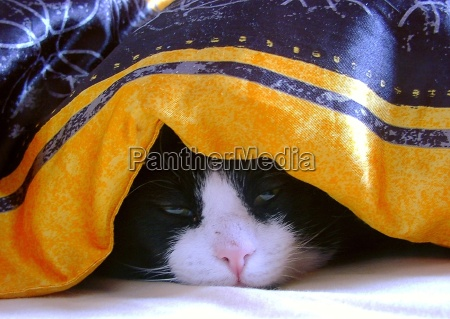 cama teto sono adormecido cansado cansaco