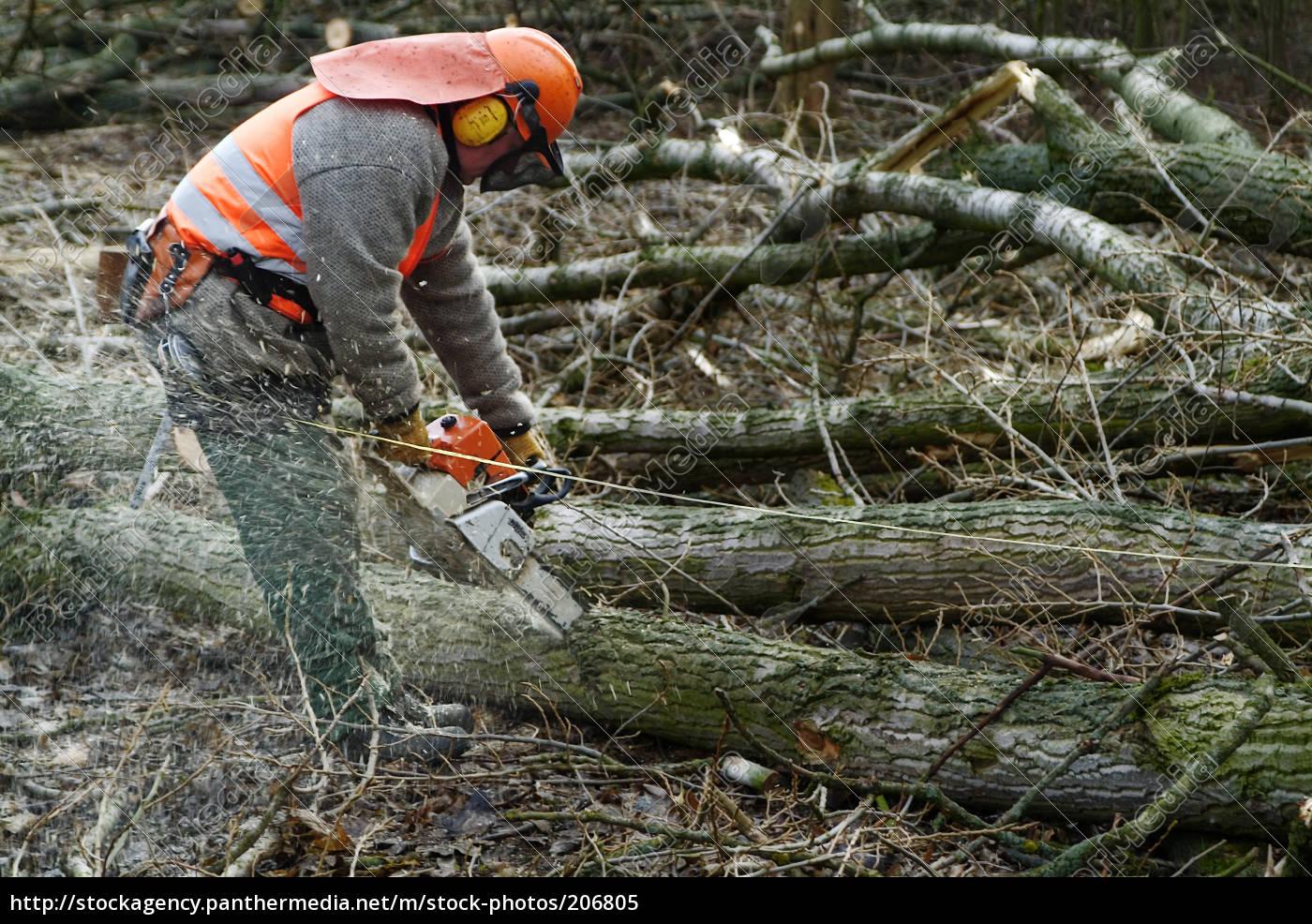 sawmill - 206805