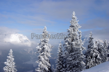 tree trees mountains winter austrians europe