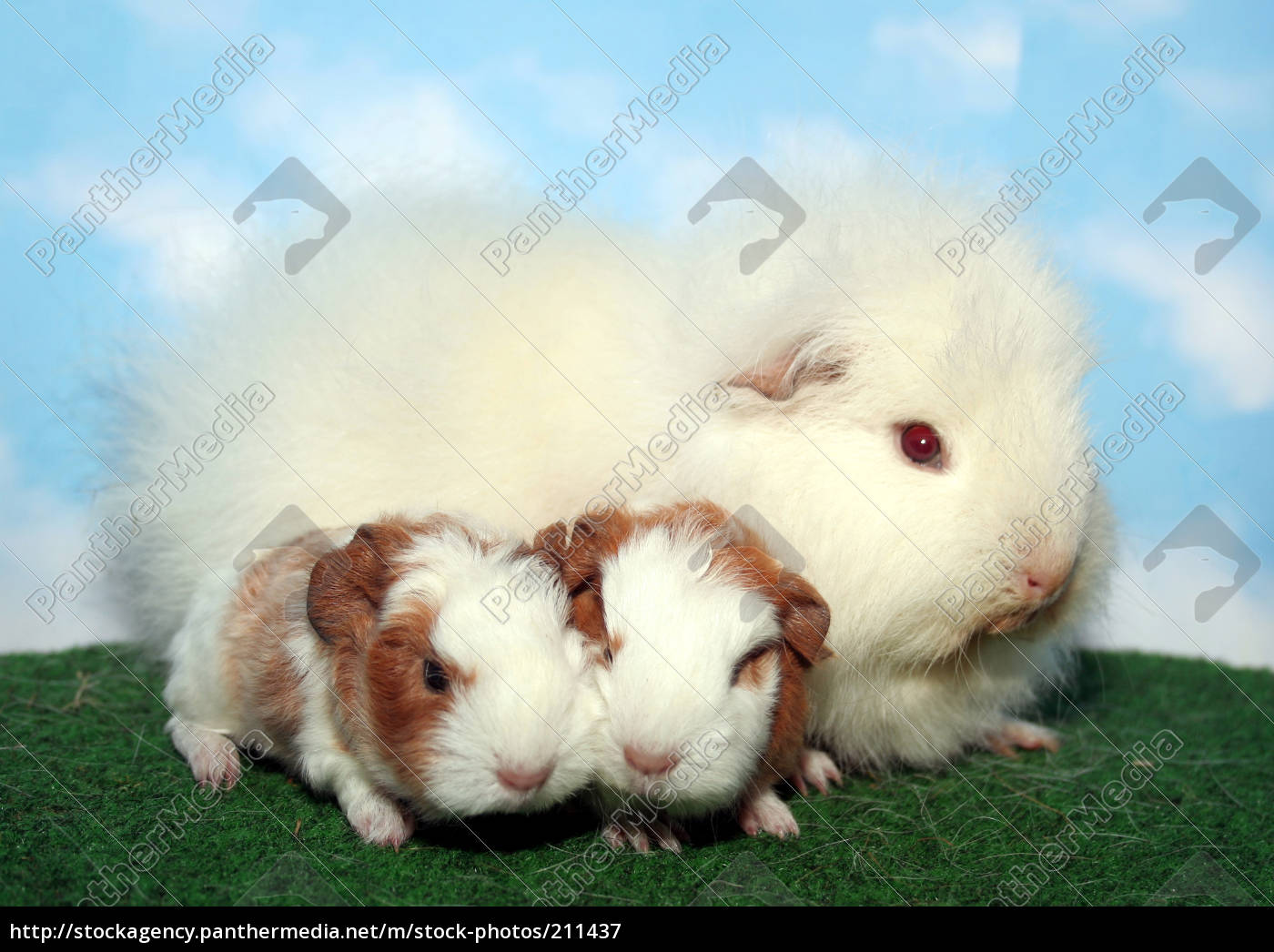 ch, teddy, baby, with, mom, - - 211437