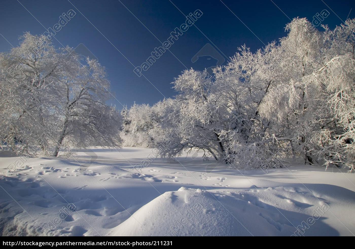 winter - 211231