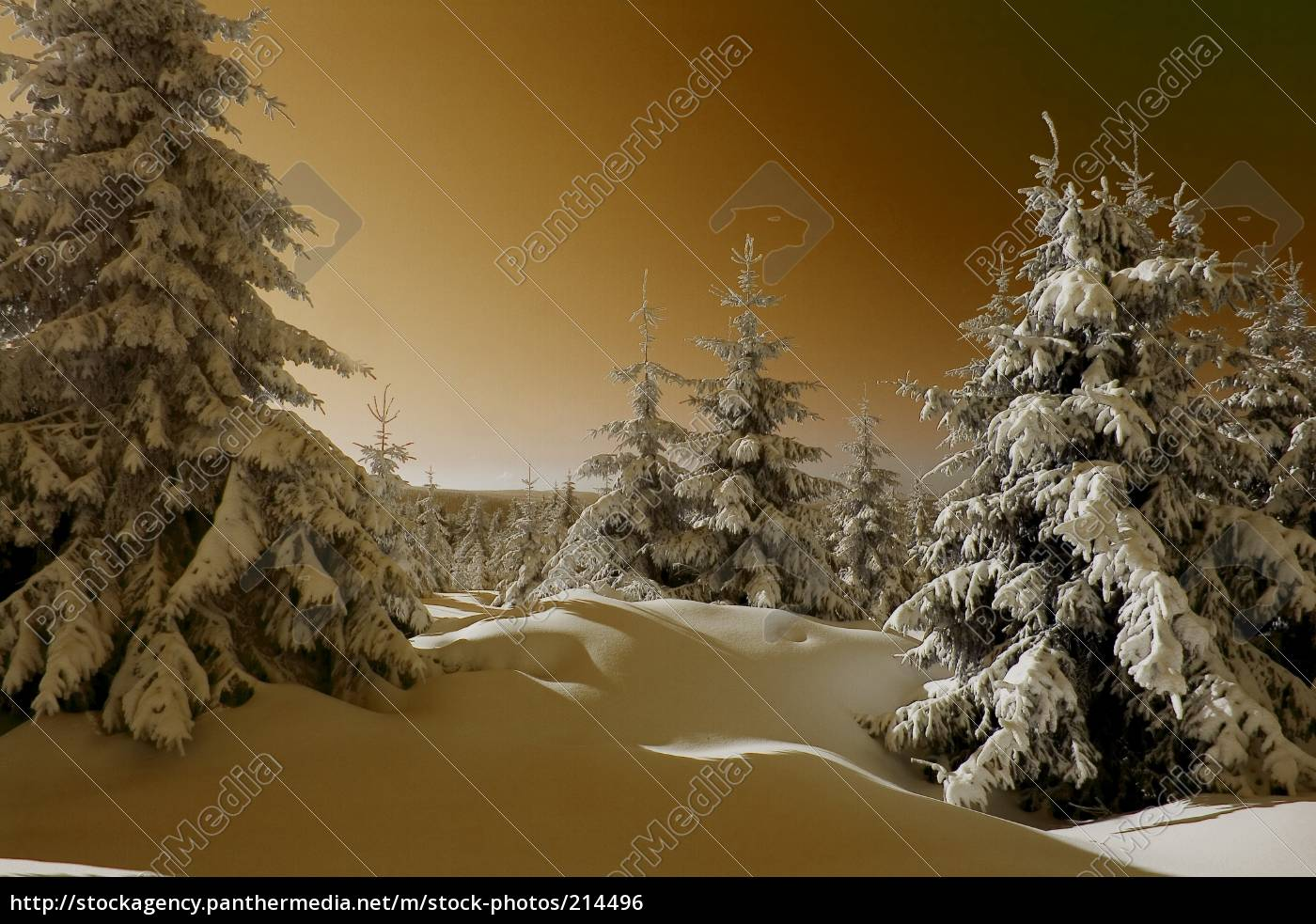 golden, winter - 214496