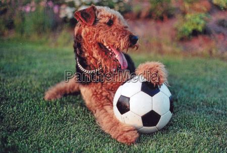 juego juega pelota perro copa del