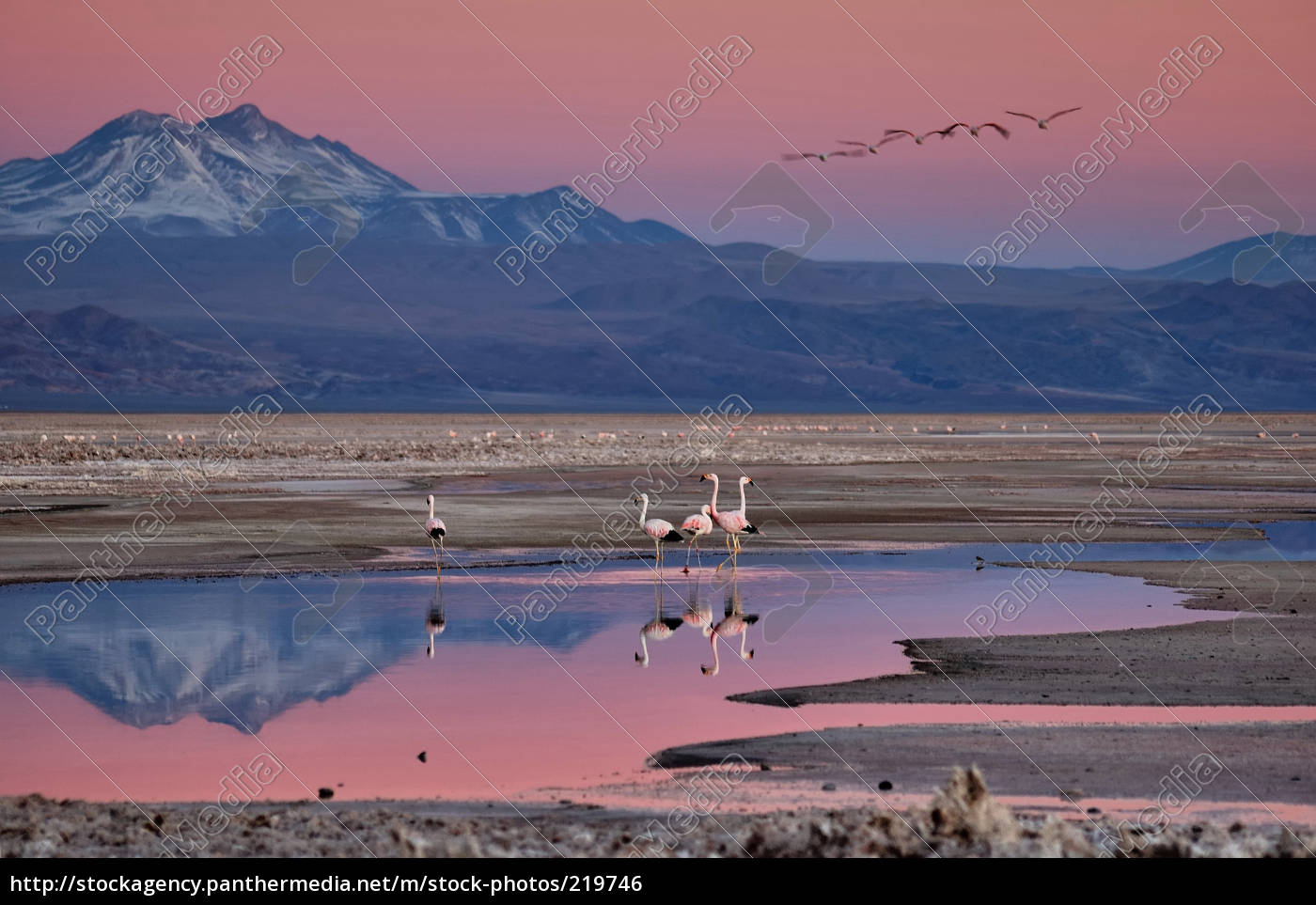 flamingos, at, sunset - 219746