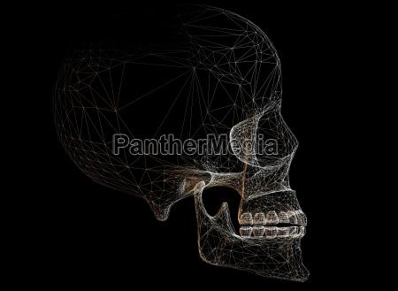 skull - 221279