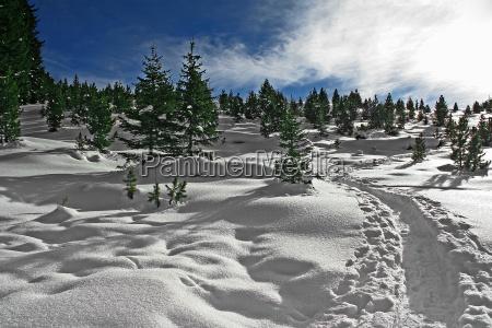 schneewanderung - 222601