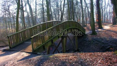 luz arvore arvores parque inverno madeira