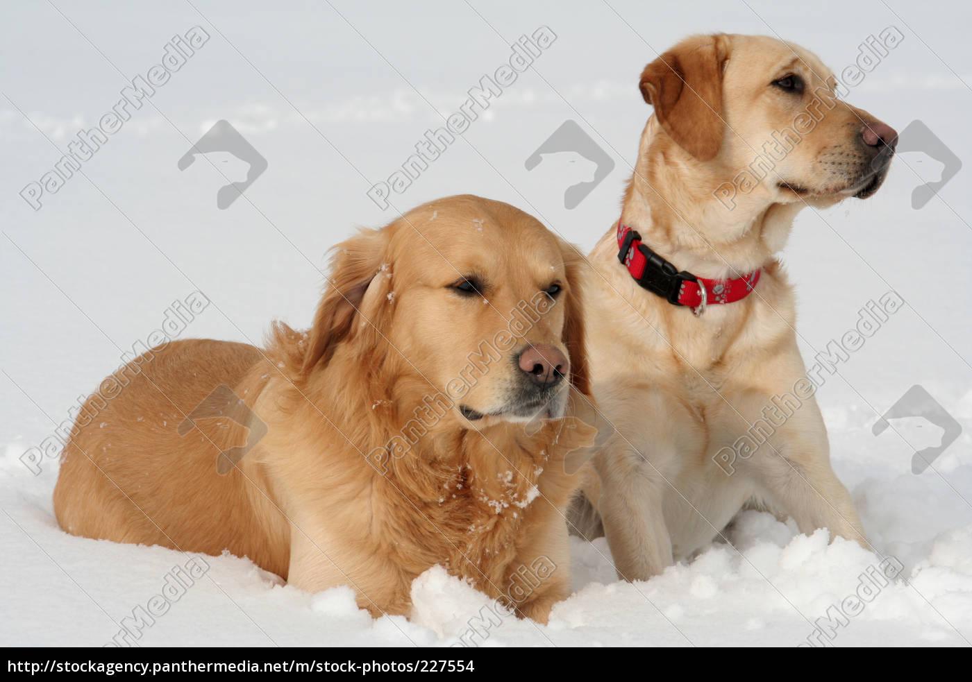 hundepaar - 227554