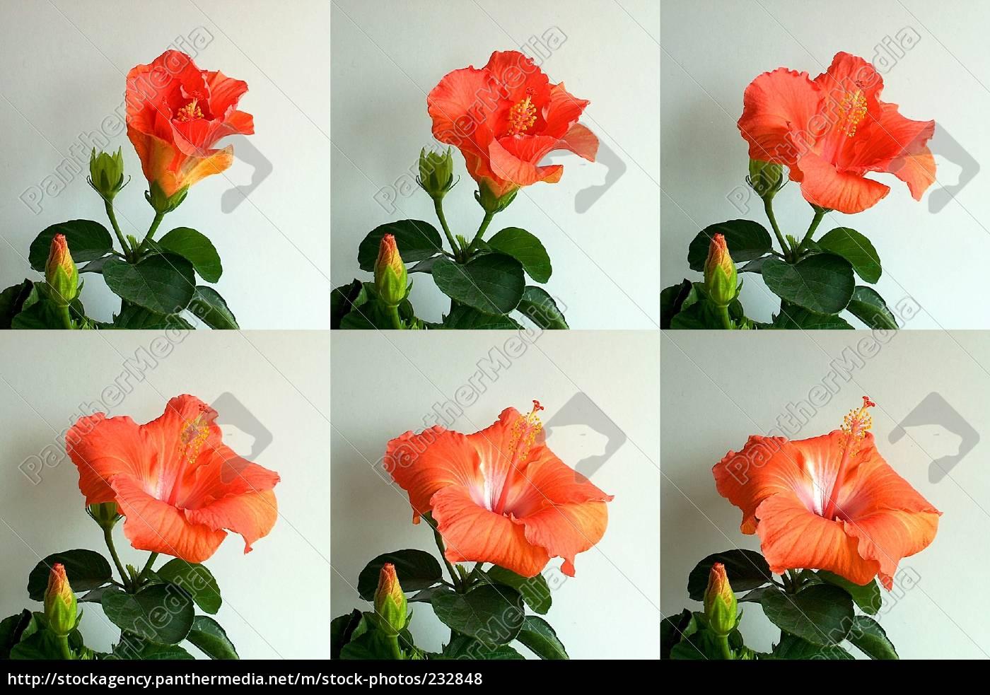 bloom - 232848