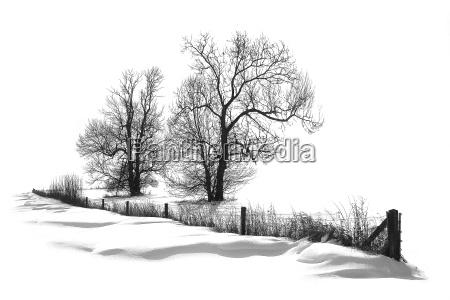 snow, snow, snow - 234296
