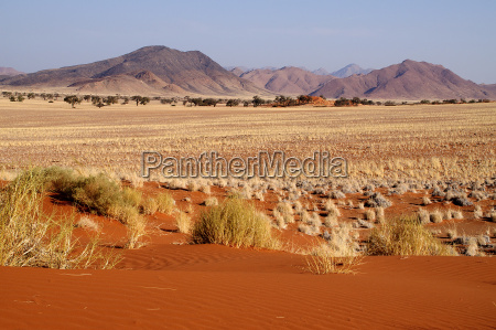 on the edge of the namib