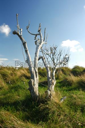 braderup heath