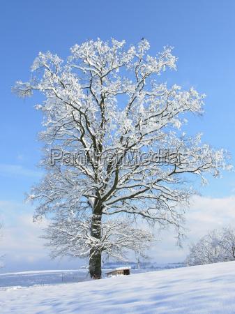 white, splendor - 245581