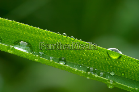 drops, on, blade, of, grass - 249712