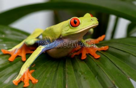 roach, -, frog, ii - 251830