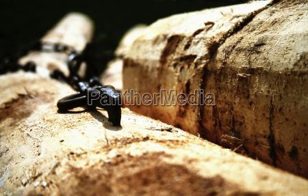 timber, transport - 251246