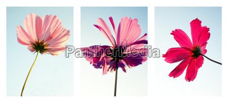 flowers - 258452