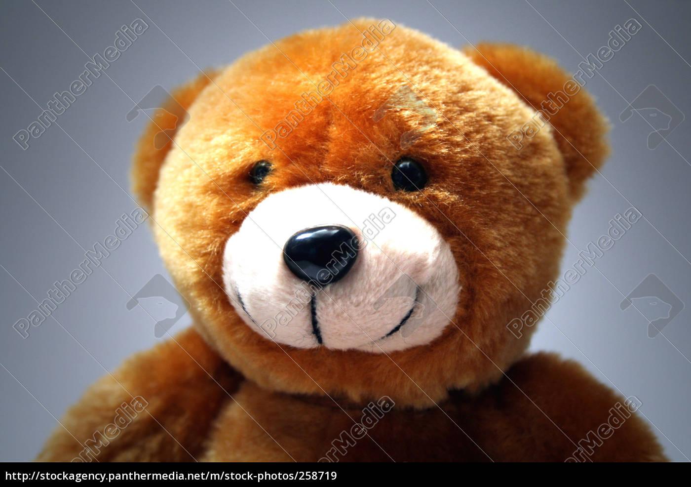 teddy - 258719