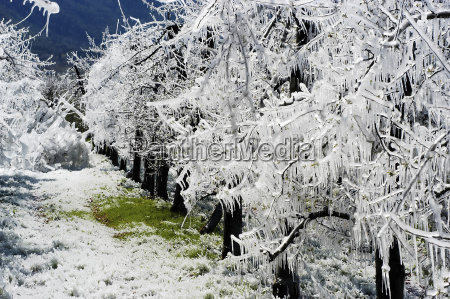 frost, irrigation, 3 - 259376