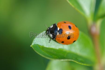 beetle, sun - 264635
