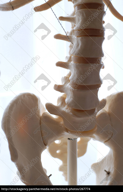 skeleton, 04 - 267774